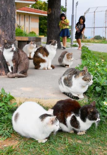 背を丸め寒さをしのぐネコ=7日午後、南城市玉城・奥武島(伊禮健撮影)