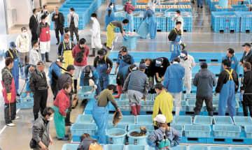 待望の競りが始まり、活気づく請戸漁港=8日午前9時20分ごろ、福島県浪江町