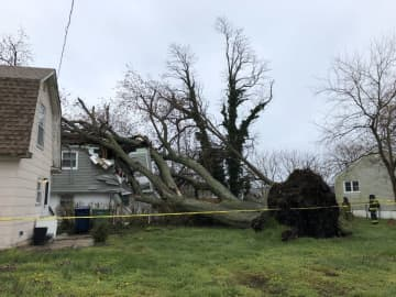 A large tree fell into a home on Heck Avenue in Neptune and police said the occupants were all safely evacuated without any injuries. (Neptune Township Police/)
