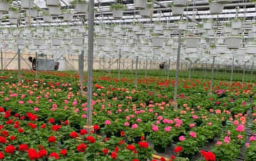 """The Voorhees Greenhouse in Hightstown is offering free drive-thru tours of its farm and has started a """"Save the Tulips"""" initiative to donate to Robbinsville Meals on Wheels. (Courtesy of The Voorhees Greenhouse/)"""