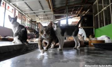 'Rahsia' kucing peliharaan terbongkar ketika PKP