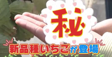 奈良で9年ぶりに誕生した驚きの新品種のいちごって?【お家で作れる簡単レシピもご紹介♡】