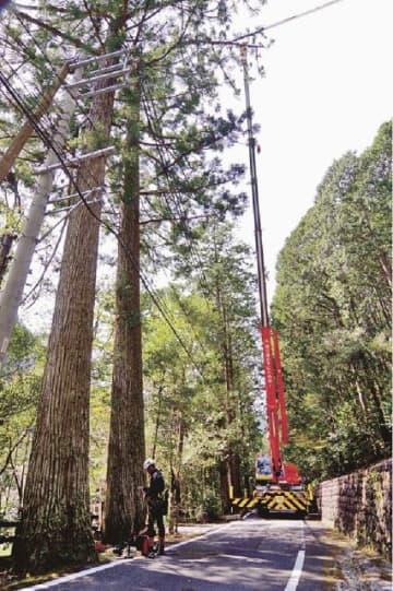クレーンを使いスギ(左から2本目)の伐採作業が進められる現場=和歌山県田辺市龍神村龍神で