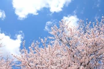 NHKが真っ向から政府批判!? 『バリバラ』の内容が過激すぎる! 障碍者の「桜を見る会」がネットで大炎上!