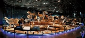 国立科学博物館、貴重な剥製コレクションをVR博物館として公開!