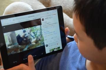 上野動物園公式ツイッターでパンダの動画を見る子ども=4月