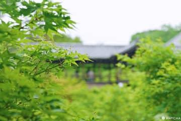 【京都景點】洗滌心靈的綠意:京都初夏青楓七選