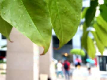 沖縄の天気予報(5月12日)梅雨前線の影響で曇りや雨の天気に