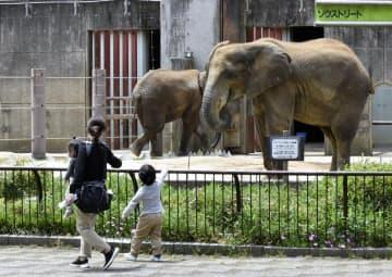 再オープンしたとべ動物園でアフリカゾウを眺める親子連れ=12日午前、砥部町上原町