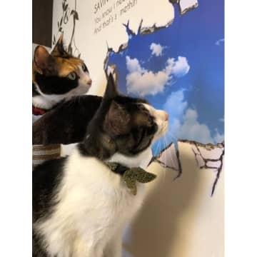 「爪とぎしすぎたかニャ?」壁の穴を見つめるネコさんがかわいすぎる…「ドッキリ」を仕掛けた飼い主さんに聞いた