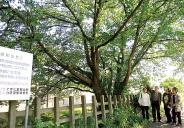 伐採予定の桜の木を眺める井上さんと近隣住民ら=8日、さいたま市見沼区