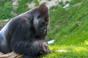 Leonardo DiCaprio Assists Seed Funding Africa's Virunga National Park