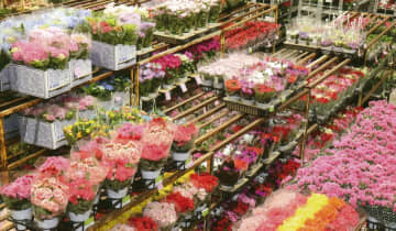 【Web限定記事】川崎北部市場花き部 消費半減も母の日需要