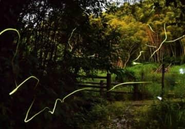 かごしま健康の森公園を舞うホタル=鹿児島市犬迫町