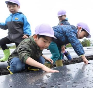 「大きくなってね」と願いを込め、トウモロコシの種に土をかぶせる子どもたち