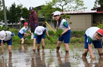 地域の農家の指導を受けて田植えをする児童ら