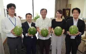 今帰仁スイカ、内閣府職員も購入 「家族で楽しみたい」