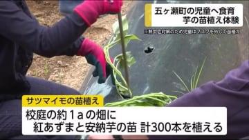 宮崎県五ヶ瀬町 小学生が芋の苗植えを体験