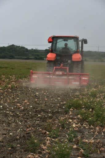 笠岡タマネギ、無念の廃棄 農業法人が180トン、外食自粛で需要減