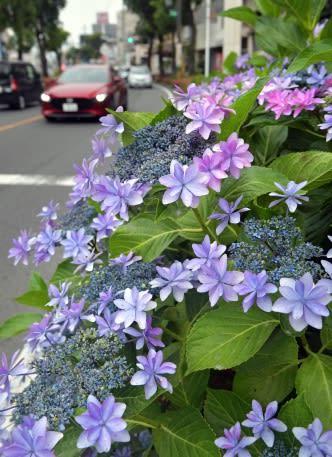 九州南部梅雨入り 平年より1日早く