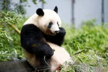 上野動物園限制人數重新開放 熊貓館暫禁拍照