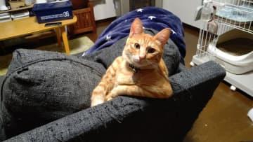 写真で一言「まあ、ここ座って話そうや」 大喜利のお題になりそうな猫写真が話題