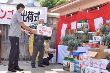 マンゴーにパイナップル… 石垣特産、旬の特産を全国お届け
