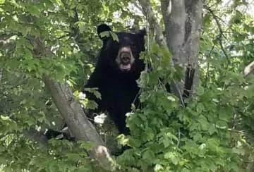 Bear sightings nearly double across N.J. during coronavirus pandemic