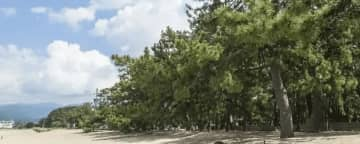 日本三大松原『気比の松原』ってどんなところ?絶景や歴史を感じながら歩こう