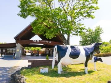 【阿蘇ミルク牧場】家族で1日中楽しめるおすすめスポット!濃厚ソフトクリームが最高