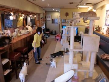 自由すぎる「猫のおうち」 猫カフェキャッティーズ(東金市)【ぼうそうにゃん散歩】