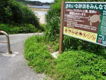 ウミガメ産卵の砂浜に車侵入 防止柵周辺のアダン刈り取り 辺戸海岸