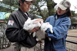 巨大ウサギの赤ちゃん
