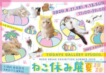 今年の夏は「ねこ休み展」で癒されよう!5周年目の猫の祭典が8/21~東京で開催!