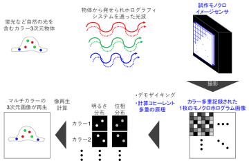自然な光を用いる瞬間カラーホログラフィックセンシングシステムの開発に成功