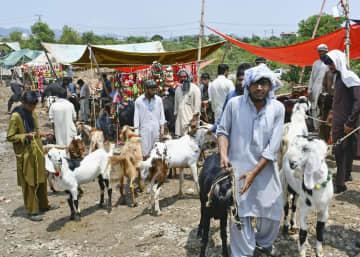 パキスタンの犠牲祭、様変わり