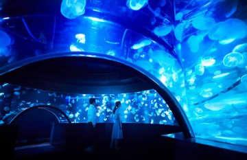 あっちもクラゲ、こっちもクラゲ... 飼育数5000匹!京都水族館に「クラゲだらけ」の新エリア登場