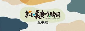 岐阜の夏の風物詩を中継!8月18日(火)『ぎふ長良川鵜飼 生中継』《テレビ 午後7:30》