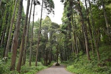 特別教育受けさせずチェーンソー使用 千葉市「昭和の森」伐採死亡事故 造園業者を書類送検