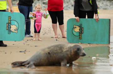 Visit Ireland's orphaned seals, offered 'fake mums' by rescuers