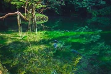 現実の光景とは思えない... 栃木・出原弁天池の情景が「神秘的」「もののけ姫みたい」と話題に