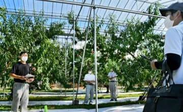 モモせん孔細菌防除へ実証実験 福島の果樹研究所
