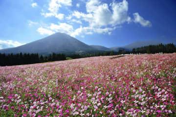 【宮崎】圧巻100万本の絶景・生駒高原コスモス園!霧島連山の雄大な景色をバックにコスモスの絶景