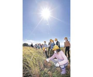 暑さの中で児童が稲刈り 金沢など猛暑日