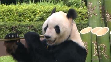 パンダの永明が28歳に 人間であれば80歳以上! 画像