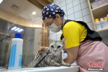 ますます熱を帯びるペット経済、アロマバスや犬猫用月餅も登場―中国