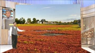湖に赤いじゅうたん?「アッケシソウ」が見頃…秋めいてくるもゲリラ豪雨には注意を 画像