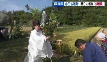 復興の秋に感謝…稲刈りの神事「抜穂祭」 北海道厚真町