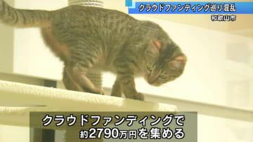 動物愛護クラウドファンディング巡り混乱 和歌山市長が陳謝