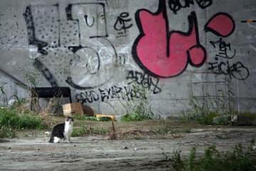 野良猫「可愛いだけではないんだよ」多摩川河川敷の猫を追い続ける写真家は訴える